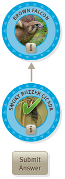 Submit Example - Connecting Smoky Buzzer Cicada to a Brown Falcon